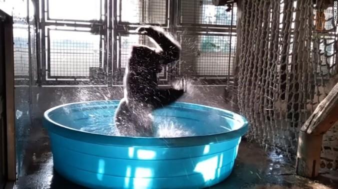 170624051705-dallas-zoo-gorilla-zola-splash-pool-sot-nr-00002328-exlarge-169.jpg